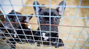 Pups suffering from behavioural and health problems are among thousands trafficked.