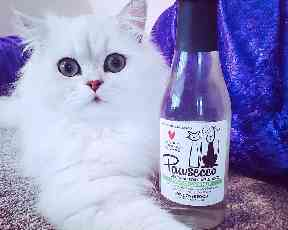 Treat your pet to a glass of Pawsecco this Christmas.