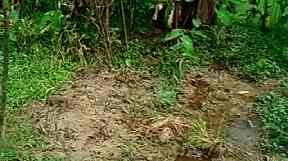 One of the reported mass graves.