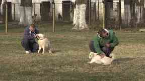 The dogs are taught simple commands by inmates.