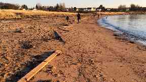 Washed up: Wood lying on Longniddry beach in East Lothian.
