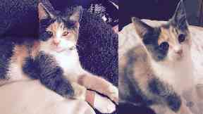 family devastated after pet cat rehomed by animal charity. Black Bedroom Furniture Sets. Home Design Ideas