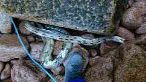 Snake: Dead reptile encountered by coastguard.