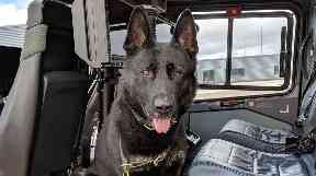 Bodie: Police dog was 'well behaved' in the air.