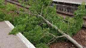 Felled: Fallen tree at Kirkwood train station in Coatbridge.