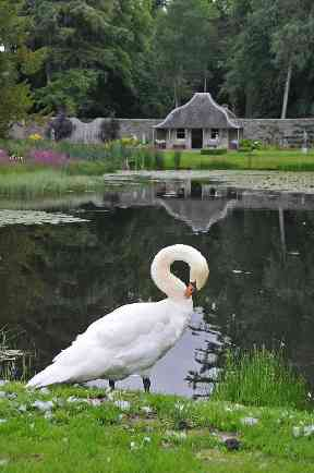 A solitary swan enjoys The Hercules Garden in Blair Atholl.