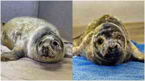 Seals: Harry and Mad-Eye are recovering.