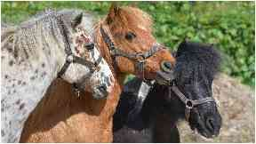 Attacked: The pony was deliberately harmed.