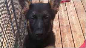 PD Slaine: On the day he was collected.