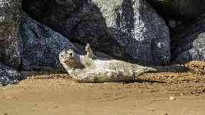 Netting: Only 11 seals were culled in the past year by Scottish Sea Farms.