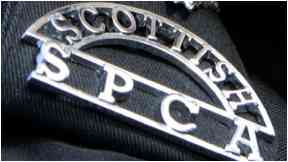 SSPCA: Appeal after carcass found.
