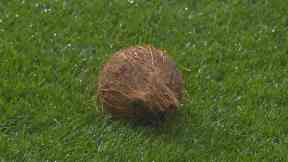 Coconut: The item was thrown onto the pitch.