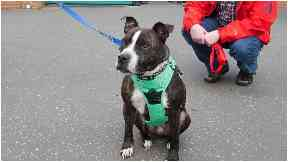 Star has been rehomed by Graeme Webb.