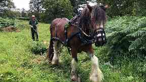 Horsing around: James and Ben clearing the woodland.