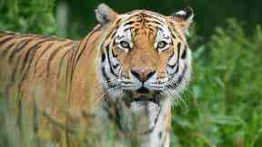 Marty: The popular tiger passed away.