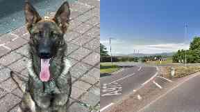 Car chase: Police dog caught man.