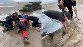 Rescue: The tourist was eventually pulled from the wet sand.