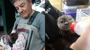 Otter cub saved after drifting away from family in heavy rain