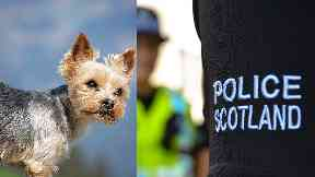 Attack: The pet's owner has been left 'devastated'.