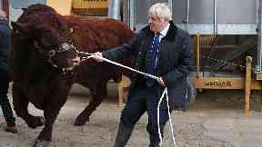 Boris Johnson tries to lead a bull at Darnford Farm in Banchory.