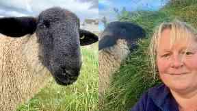 Family: Melanie MacLean with pet lamb Norman.