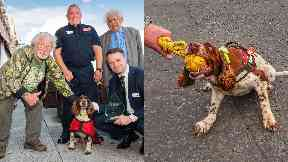 Top dog: The event was hosted by TV personality Bill Oddie and Lord Desai.