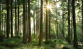 Mountaintop forest to tackle loss of high-altitude woodland