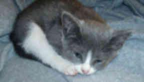 Wheel drama: Kitten saved from engine