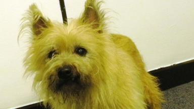 Claus: Lost dog refused to leave bus