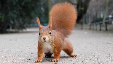 Squirrel: Last year's scheme received 154 reports.