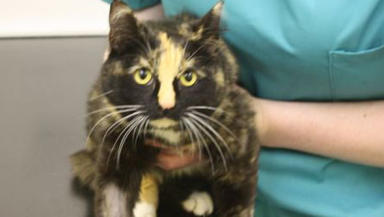 Cat trapped: Mila was injured in trap that may have been set illegally.