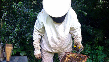 Apiarist: The trial is thought to be the first of its kind in the UK (file pic).
