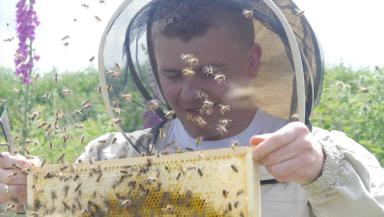 Honey maker: Sebastian Bacz has set up his beekeeping firm, in Aberdeen.