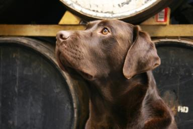 Bracken: BrewDog are in mourning after loosing their mascot pooch to cancer.
