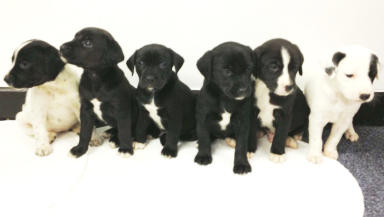 Puppies found abandoned in Pollok