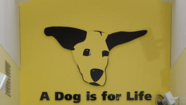 Dogs trust banner, cropped from SWNS image inside rehoming centre.