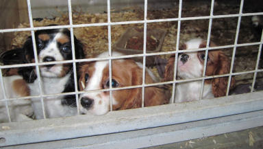 Warning: Illegal puppy farms.