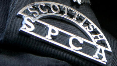 Scottish SPCA: Appeal for information after poisoning (file pic).
