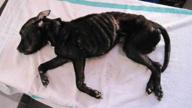 Jack: The dog's body was thrown over a fence after he starved to death.