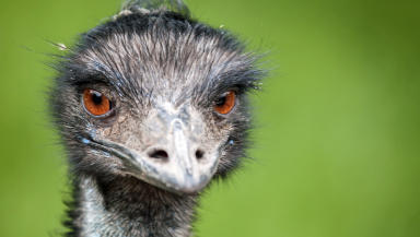 Emu: Escaped from care home.