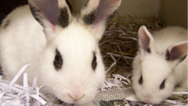 44 rats and 15 rabbits found dumped on A68 between Edinburgh and Dalkeith. Pic from Scottish SPCA. Uploaded on April 9 2015.