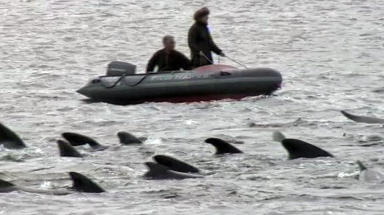 Ninteen whales died at Kyle of Durness in July 2011, a day after the Navy blew up three 1000lb bombs at nearby Cape Wrath. News image from broadcast footage June 25 2015.