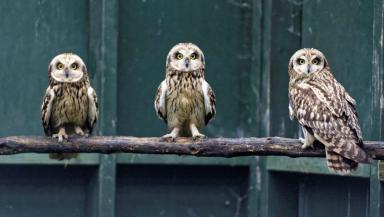 Wild return: Owls which were found on North Sea platform.