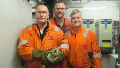 Oil rig: The owl was airlifted back to shore with crew returning from North Sea.