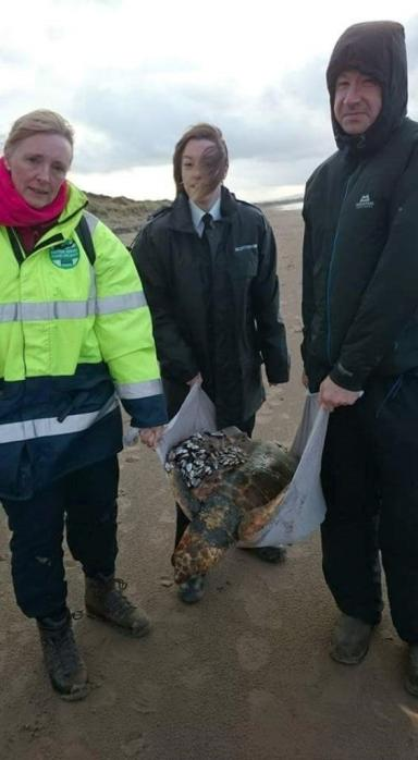 Dead: Harley the turtle was in critical condition after Storm Desmond.