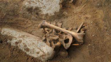Bones: The remains were uncovered in 2014.