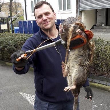 Electrician James Green with the giant rat which is said to have weighed 25lbs.