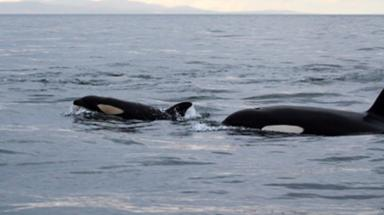 Whales were caught on camera by Pippa Low.