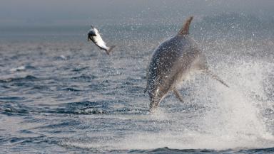 Salmon chasing: Karen enjoys watching the bottlenose dolphin's source their food.