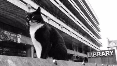 The University of Edinburgh's famous Library Cat is still missing.